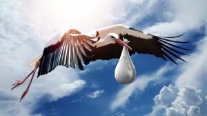 bird-3058712_1920-300x168