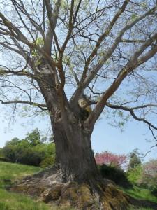 les-arbres-sauveront-ils-la-planète