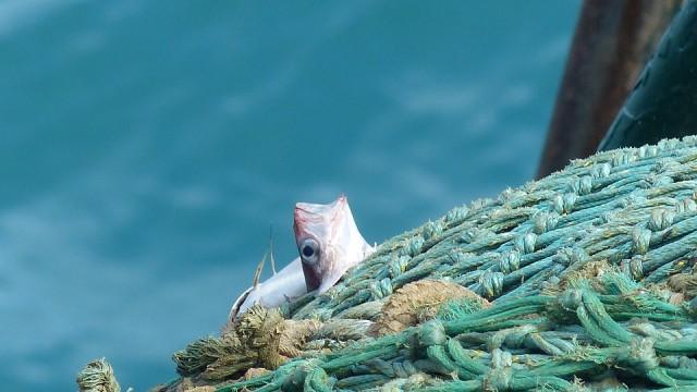 poissons en danger achetons responsable